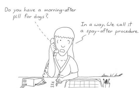 morning after pill for dogs 253 best images about national vet tech week on veterinary