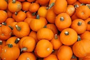 is canned pumpkin made from pumpkin mnn mother nature