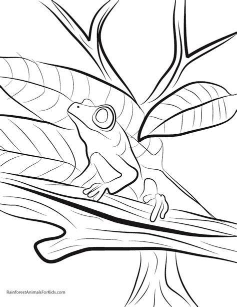 coloring pages of tree frogs tree frog coloring pages az coloring pages