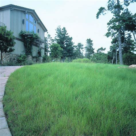 an alternative to lawns that uses less water sunset