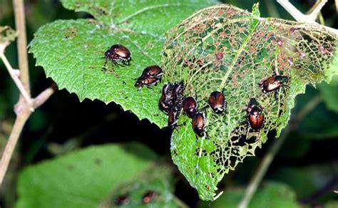 amazing benefits    neem oil  plants