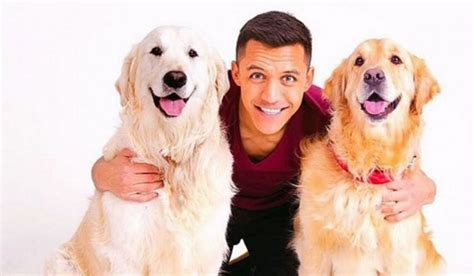 alexis sanchez dogs instagram so arsenal alexis sanchez sets up instagram account for