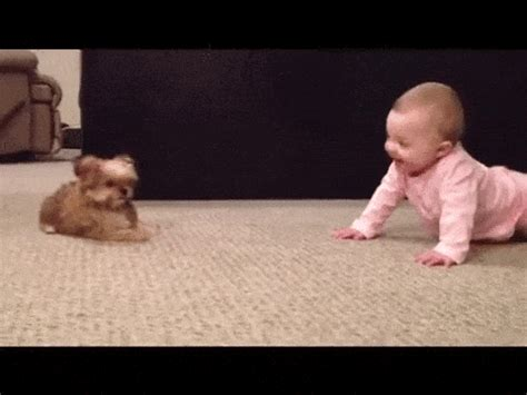dog  baby gifs find share  giphy