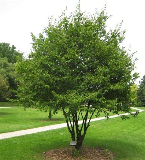 shade tolerant fruit trees shade tolerant trees at lotus gardenscapes farm