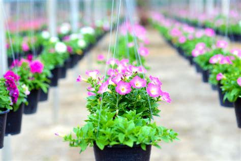 Tanaman Gantung a quality plant label makes a house plant a home plant plant markers