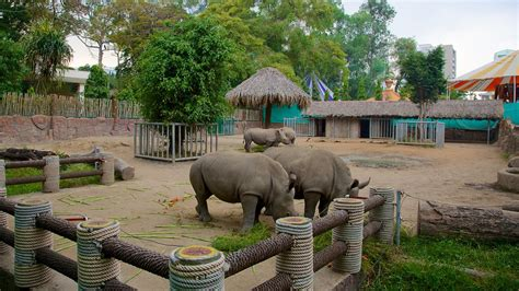 Zoo And Botanical Gardens Saigon Zoo And Botanic Garden In Ho Chi Minh City Expedia Ca