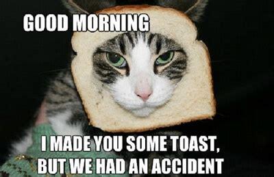 Cat Toast Meme - 30 good morning meme pictures that will definitely make