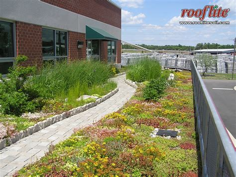 green roofs bringing nature to your doorstep intensive roof intensive green roofs