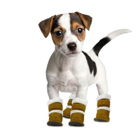 dogs in boots pugz boots baxterboo