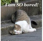 I Am SO Bored  Animals Make Me Laugh Pinterest