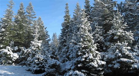 fun christmas tree places in se wisconsin 7 places to cut your own tree in northeast wisconsin