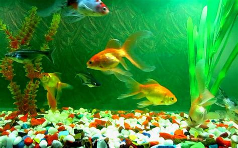 background aquarium aquariums images aquarium wallpaper hd wallpaper and