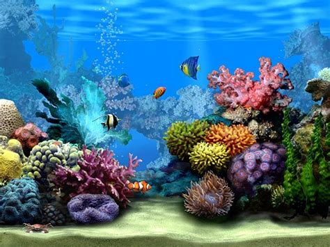 no matter how many fish in the sea moving fish backgrounds free no downloads