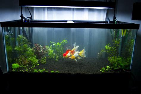 Bedroom Set Craigslist green mountain goldfish
