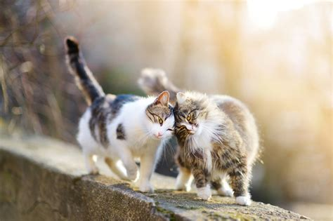 introducing kitten to introducing kittens to an cat behavior vca inc vca inc