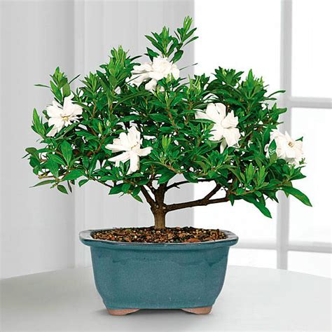 best plant to have in bedroom the best 5 bedroom plants to get rid of stress and sleep