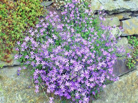Immergr Ne Pflanzen F R Sonnige Standorte 224 by Bodendecker F 252 R Sonnige Standorte Mein Sch 246 Ner Garten