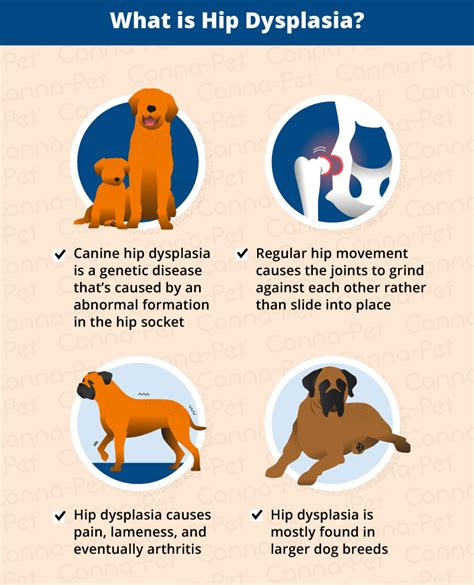 symptoms of hip dysplasia in dogs hip dysplasia in dogs causes treatment more