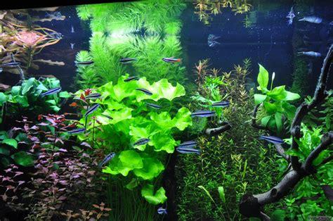 aquascape light calculator unterwasserwelt flowgrow aquascape aquarium database