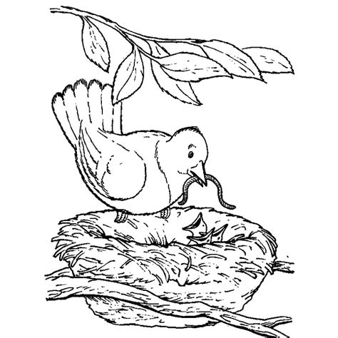 printable coloring pages for senior citizens coloriage oiseau nid a imprimer gratuit