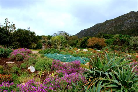 Three Continents Three Spectacular Botanical Gardens Botanical Gardens Cape Town
