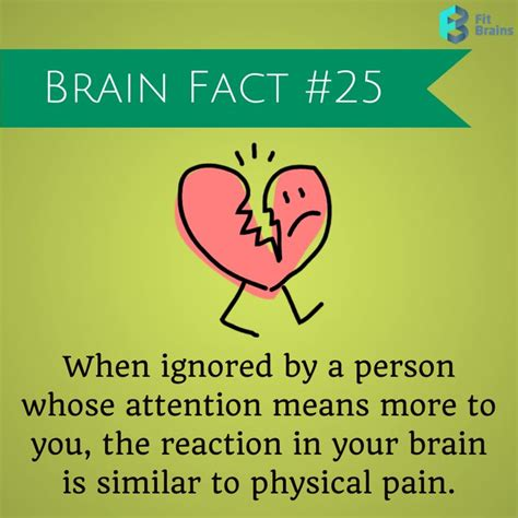 Fact Of The Day by Brain Fact Of The Day Fit Brains Brain