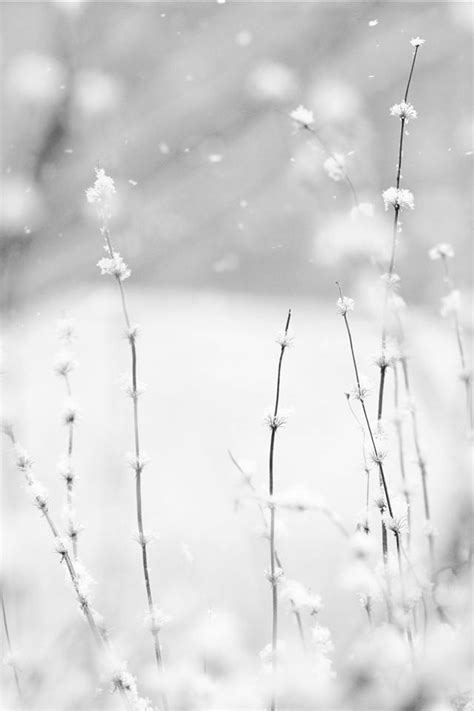 """""""Snow falling and night falling fast, oh, fast In a field"""