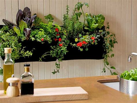 Where Can I Buy Indoor Gardening Supplies Hong Kong Moms Indoor Vegetable Gardening Supplies