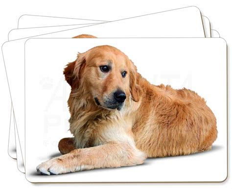 golden retriever gifts golden retriever picture placemats in gift box id 22445