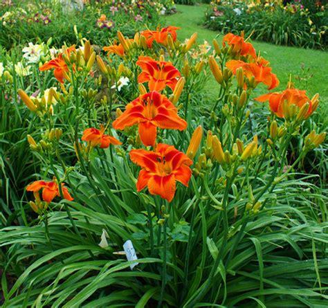 Heavenly Gardens Daylilies by Heavenly Gardens