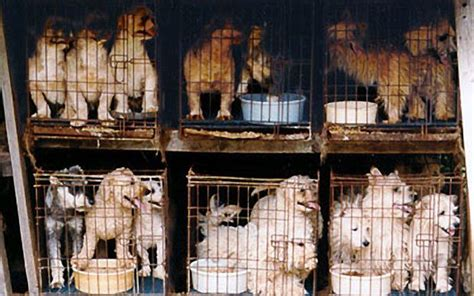 puppy mill laws missouri state senate overturns puppy mill favored by voters