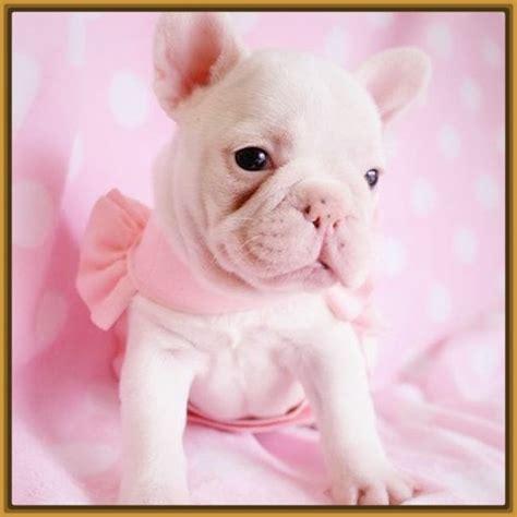 descargar imagenes sarcasticas para bb descargar imagenes de perritos bebes archivos imagenes