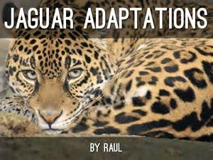 Adaptations Of Jaguars Adaptations By Sje 4th Grade Cart