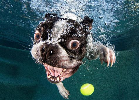 dogs swimming underwater dogs in swimming pools slapped ham