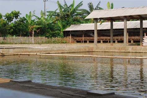 Bibit Ikan Gurame Empang Fahrul tentang saya catatan seorang pemancing sejati