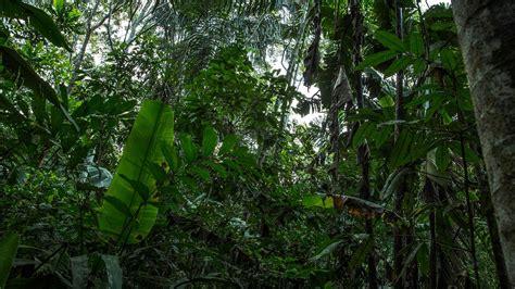amazon vietnam local living ecuador amazon jungle