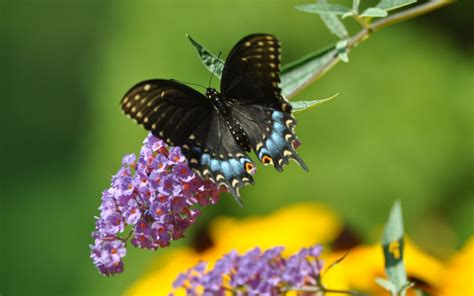 imagenes de mariposas reales bonitas hermosas mariposas taringa