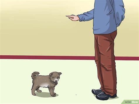 andare spesso in bagno a defecare come insegnare al cucciolo dove fare i bisognini