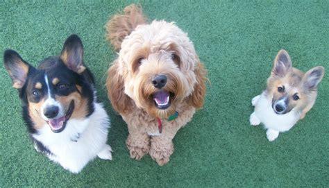 free puppies tucson az dogs in az tucson arizona page 2 city data forum