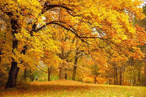 the science behind beautiful fall foliage 187 science abc