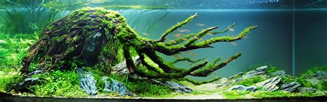 Aquascape Driftwood by Aquascaping On Aquascaping Planted Aquarium