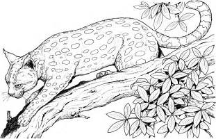 wildlife coloring pages deer coloring page animal doe and fawn coloring pages