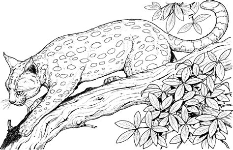 deer coloring page wild animal doe and fawn coloring pages