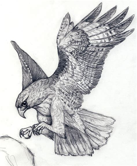 hawk tattoos designs hawk pinteres