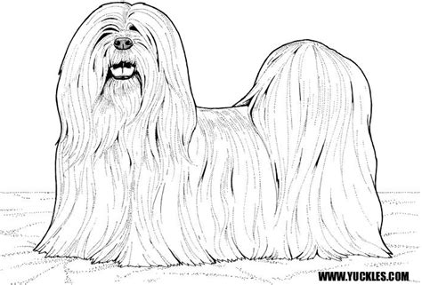shih free colouring pages