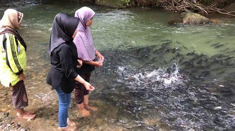 sungai penuh ikan ikan  youtube