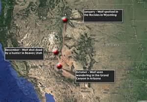 where does the colorado river start and end wolf killed in utah may been famed grand