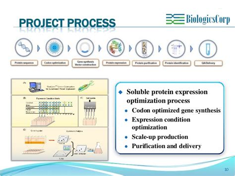 protein expression soluble protein expression optimization