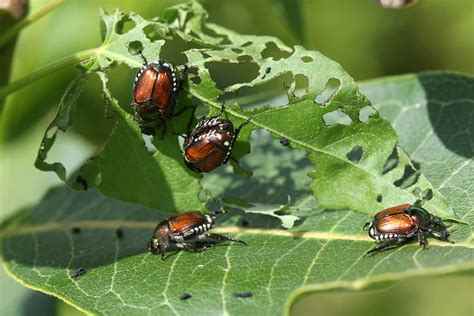 bug treer types of insect pests in your garden