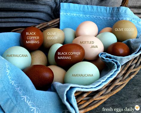 egg color chart a rainbow of egg colors fresh eggs daily 174